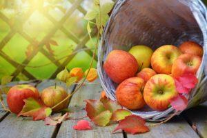 apples-1776744_1920
